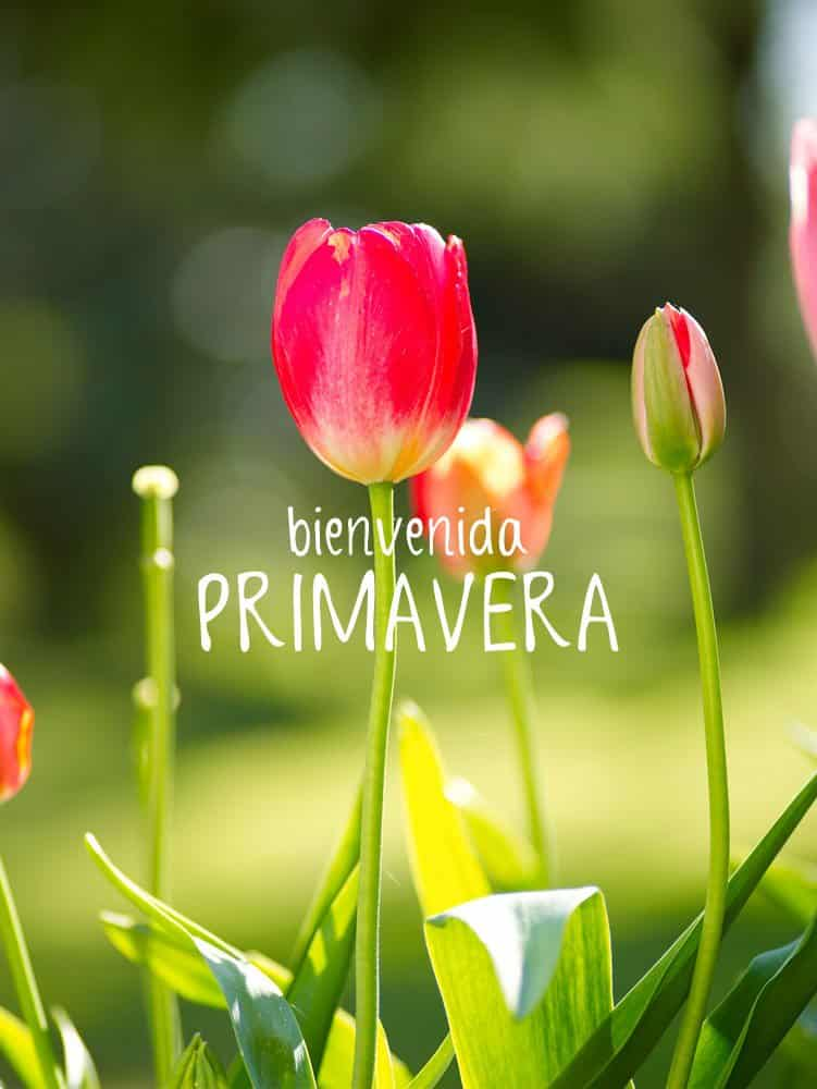 Feliz Día De La Primavera Imágenes Con Frases De Amor Y