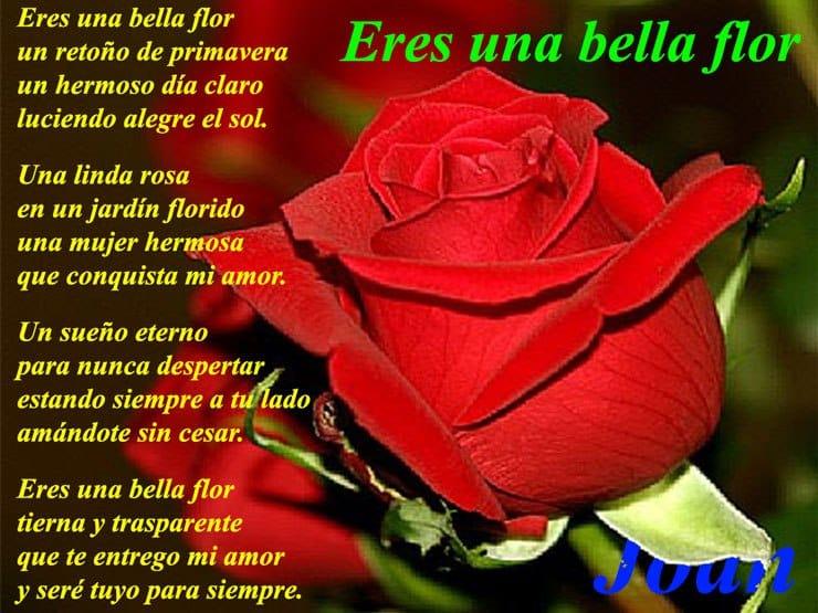 letra de la cancion te regalo una rosa la encontre en el camino