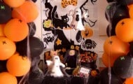 Halloween_Decoration_by_Verusca