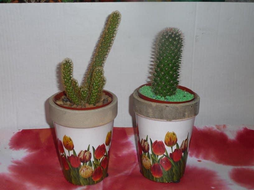 pequeas plantas con macetas decoradas pintadas para regalar a tus amigos